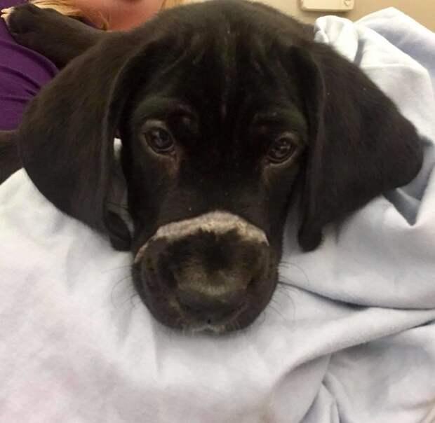 Нежный щенячий нос был застёгнут стяжкой для кабеля! А глаза искали спасения…