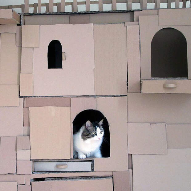 Человек построил для своего кота замок из картонных коробок в виде дракона животные, картон, кот, котики, своими руками