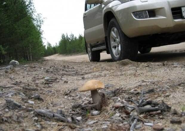 Грибы, как губка впитывают всю гадость извне, а потом травят грибников. Так ли это, разбираемся вместе с Вишневским