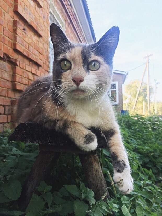 Нюська Хвостатые, братья наши меньшие, город, кот, кошка, улица, уличные кошки, эстетика