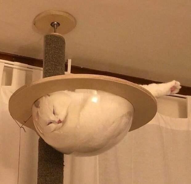Ну, этого пенделя вы уже видели животные, коты, смешные картинки, юмор
