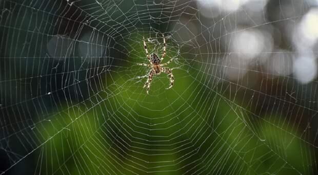 В штате Виктория в Австралии дожди привели к нашествию пауков