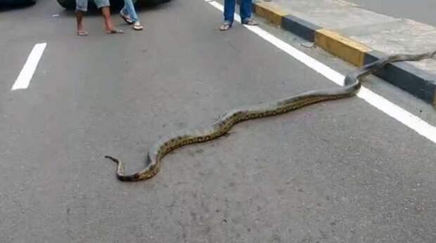 змея на дороге