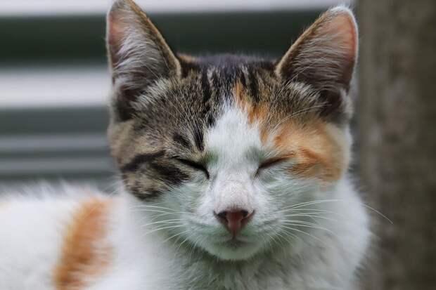Облезлая кошка упорно лезла через забор самого шикарного коттеджа в округе. Рассказываем, чем обернулась такая настойчивость
