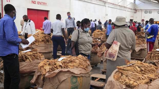 Зимбабвийские фермеры установили рекорд по продаже табака