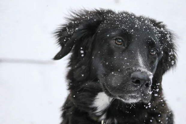 Лучше не гулять по зимним паркам с собаками. Объясняем, чем посыпанный солью тротуар опасен для питомца