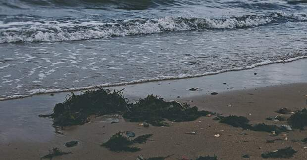 Главной причиной загрязнения океана у Камчатки назвали водоросли