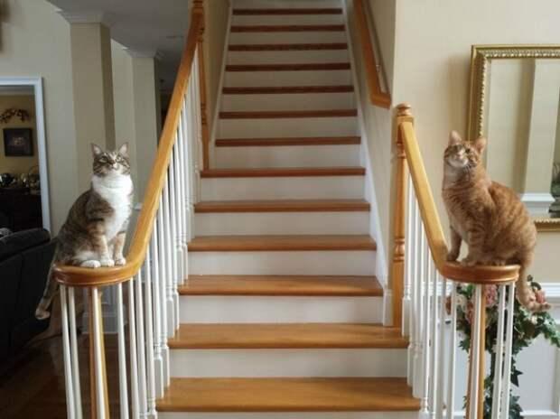 Фотофакты, которые понял каждый, у кого два кота