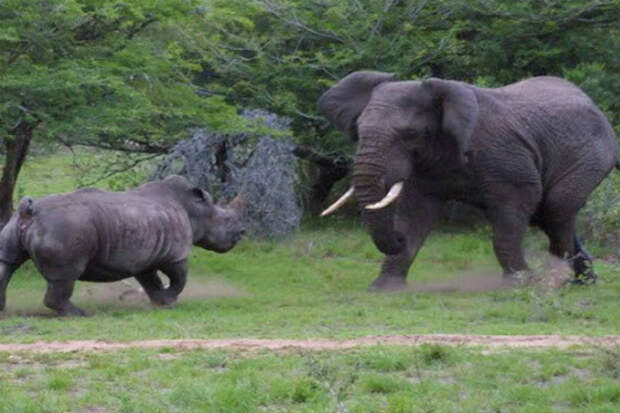 Слон в ярости: дикий гигант против львов, крокодилов и носорогов