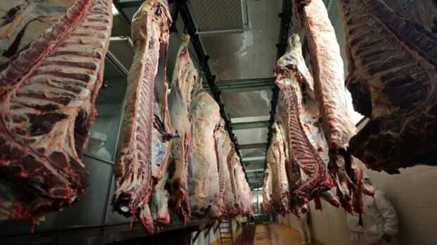 Мясо больных коров из Польши посеяло панику по всей Европе