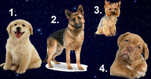 Тест с собаками расскажет, какой мужчина вам нужен