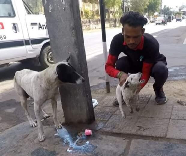 Мужчина берет щенка