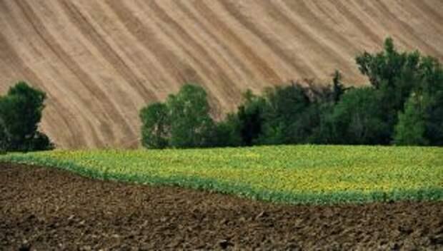 В Украине озвучили количество земельных участков, выданных ветеранам войны на Донбассе