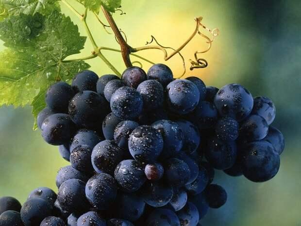 Виноград прекрасно лечит печень!