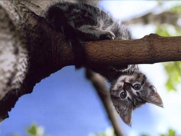 Блог - Привет.ру - Серый кот - Личный интернет дневник пользователя Лана Плужник