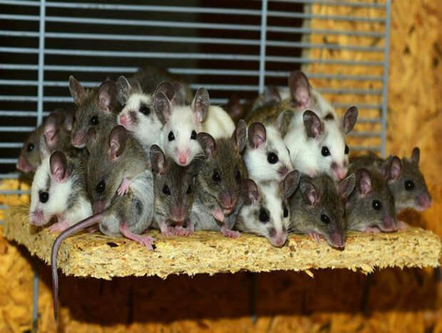 Ученые в Японии обнаружили у млекопитающих способность дышать через кишечник