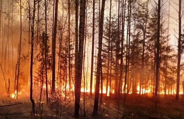 Жителей Кубани предупредили о высоком уровне пожароопасности