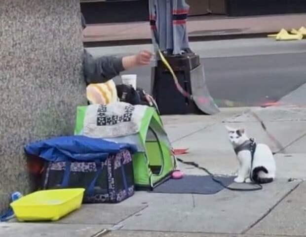 «Сам не съем – отдам котику!»: бездомный мужчина, не имея ни гроша в кармане, заботится о бродячем коте