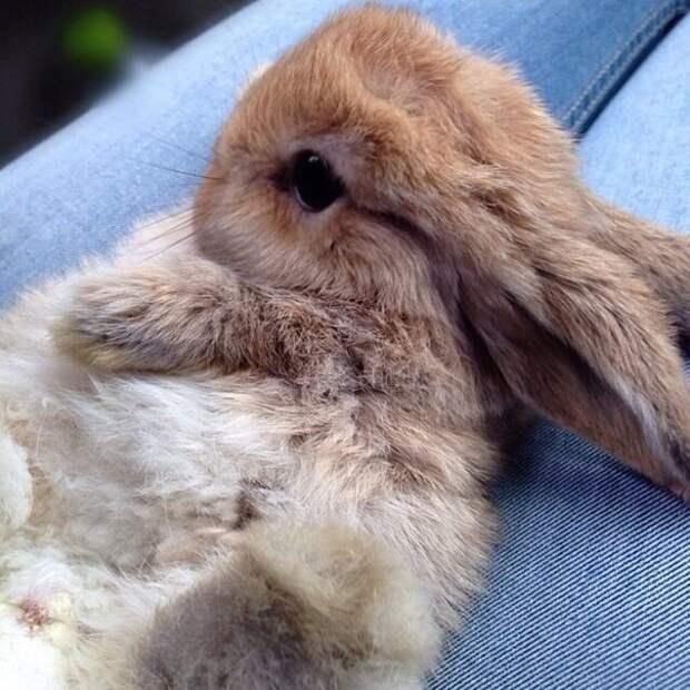 Эти кролики