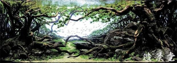 Искусство аквариумистики— удивительные подводные пейзажи