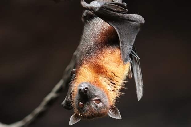 В Митинском лесопарке начали просыпаться летучие мыши