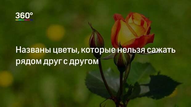 Названы цветы, которые нельзя сажать рядом друг с другом
