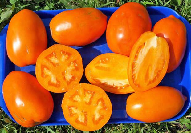 томаты 2011 года