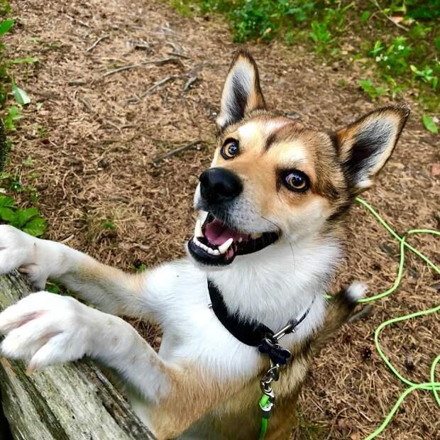 5 редких пород собак, о существовании которых ты не знал