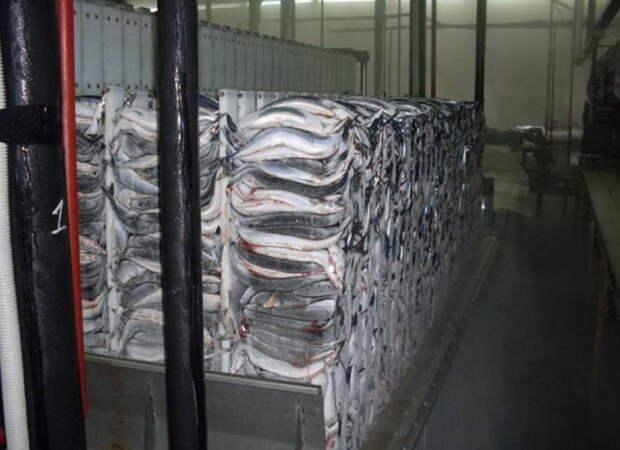 «Ответный удар»: Россия запретила ввоз китайской рыбной продукции