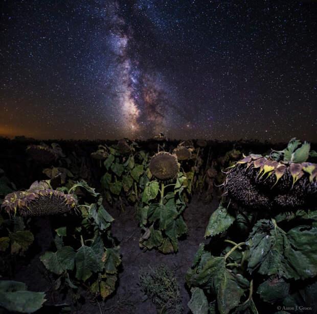 Plants Vs Milky Way by Aaron Groen on 500px