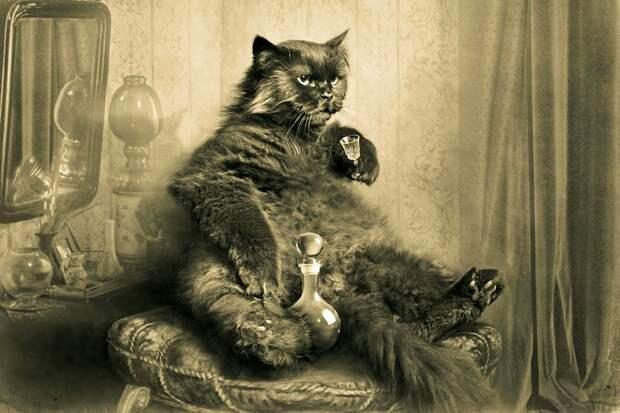 Компания Google объявила кастинг для российских котов