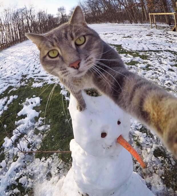 8 забавных фото кота-путешественника, который делает селфи