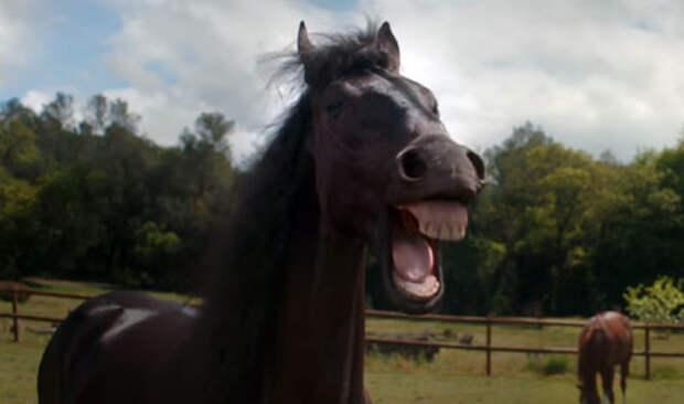 Volkswagen Tiguan: когда лошади не смеются