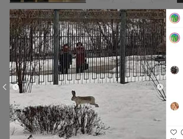 Загадочным образом на 2-ую Вольскую прискакал заяц