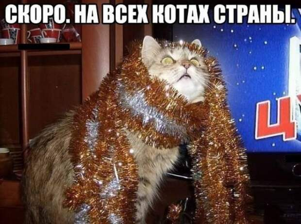 Котоматрицы  на Новый  год  котоматрицы, новый год, юмор