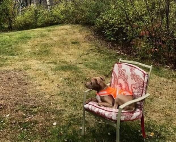 Пес на стульчике