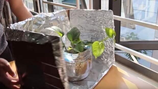 Поможет вашим растениям. Фото: youtube.com.