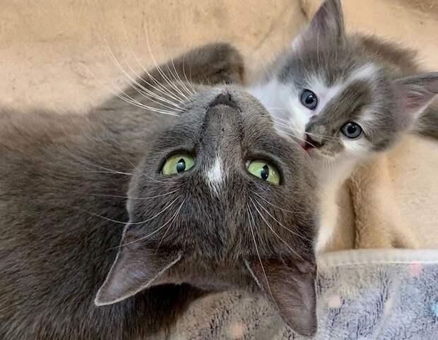 Исхудавшая кошка с больной лапой боролась за жизнь и здоровье своих котят
