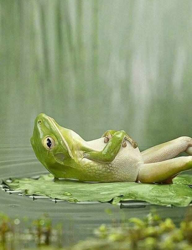 Просто лягушка, которая задумалась о бренности бытия животные, забавно, неожиданно, нужный момент, подборка, природа, фото, юмор