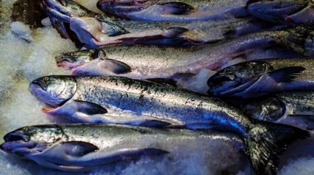 Диетолог Круглова посоветовала россиянам покупать рыбу глубокой заморозки