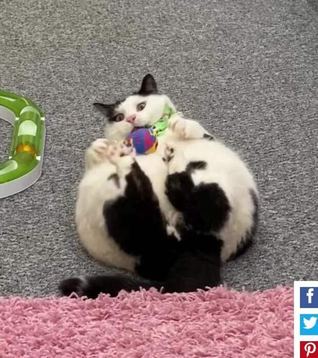 Вечно голодный кот вскрывает любые замки в поисках еды