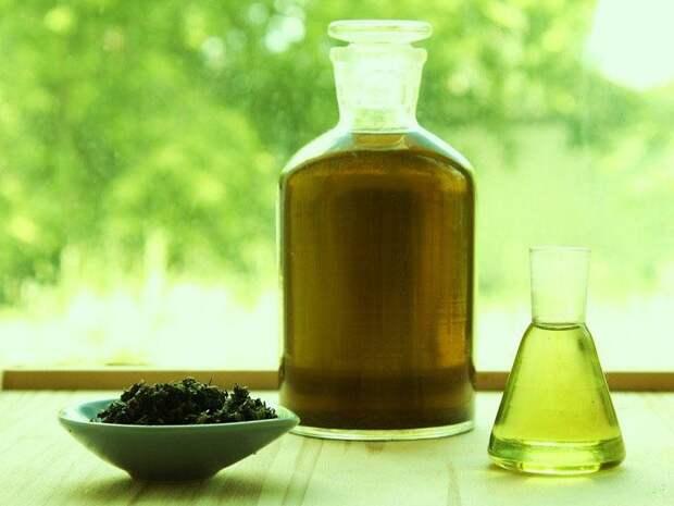 лечебные свойства каланхоэ в настойке