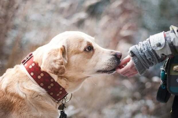 Лучший друг: может ли собака забыть своего хозяина?