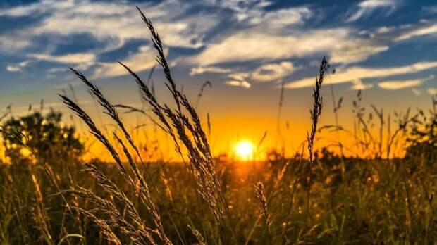 Россиянам напомнили, как помочь пострадавшему от солнечного удара человеку