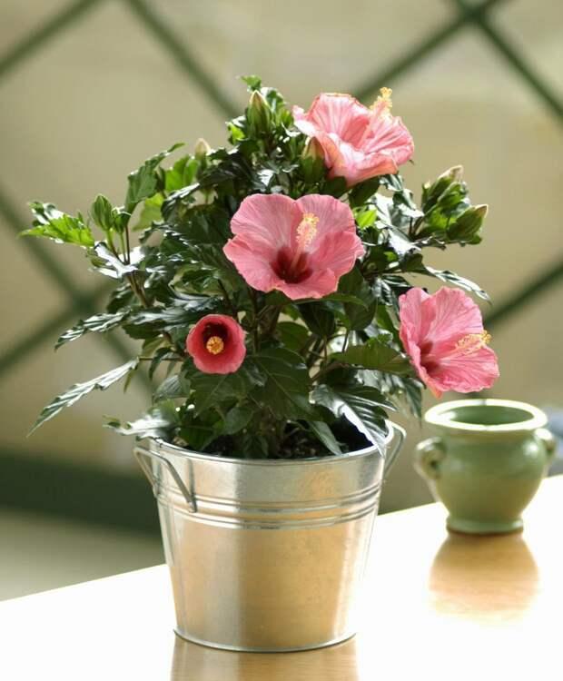 Обои с розами в интерьере: подбираем отделочные материалы для стен (34 фото)