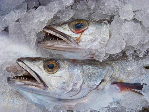 Суд в Петербурге оштрафовал компанию за ловлю слишком маленькой рыбы