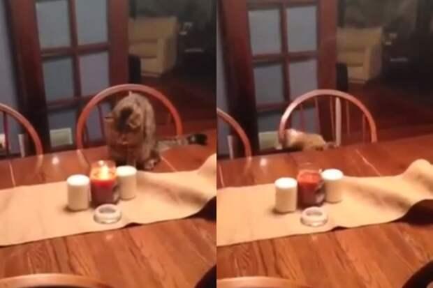 Драматичное падение кота со стола заставило интернет хохотать