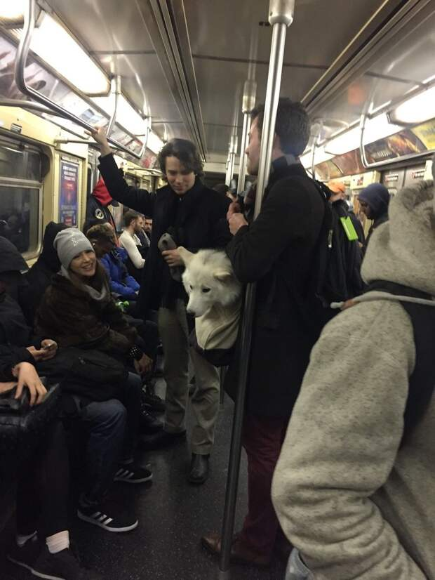 Власти Нью-Йорка запретили провозить в метро собак, которые не помещаются в сумке. Но жители города выкрутились