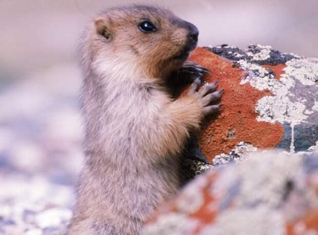 Фото нет (представьте себе обычную мышь ) животные, наука, природа, удивительное