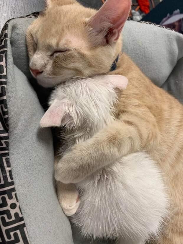 Животные, которые проявили больше любви и сострадания к ближним, чем многие люди